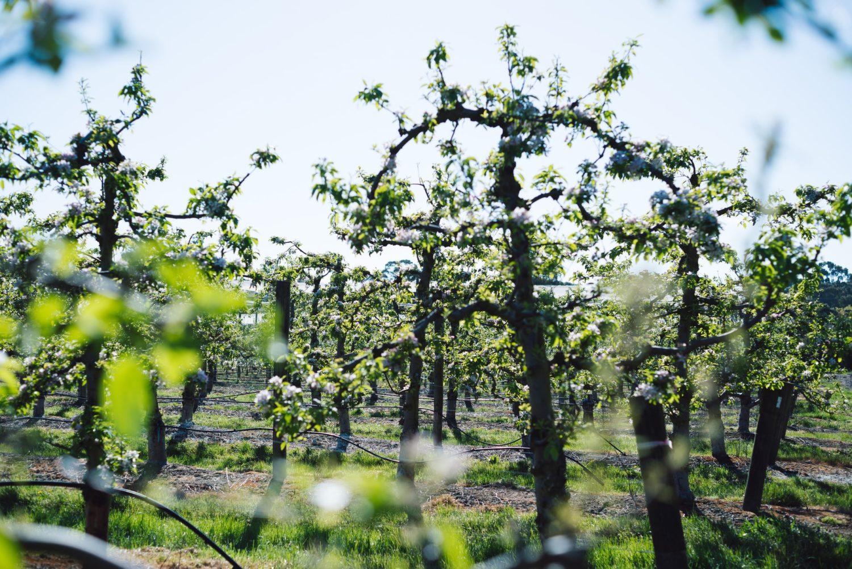 Obstbäume Schneiden Wann