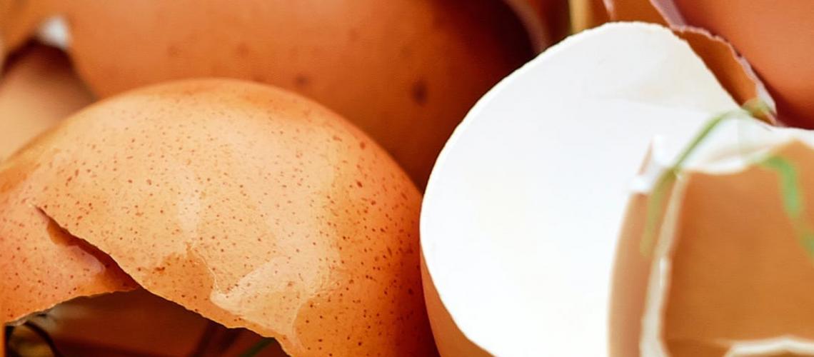 eierschalen als dünger verwenden