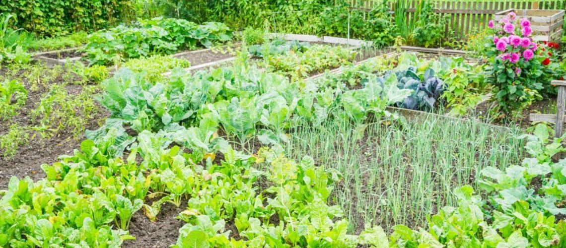 mischkultur pflanzen mix standort