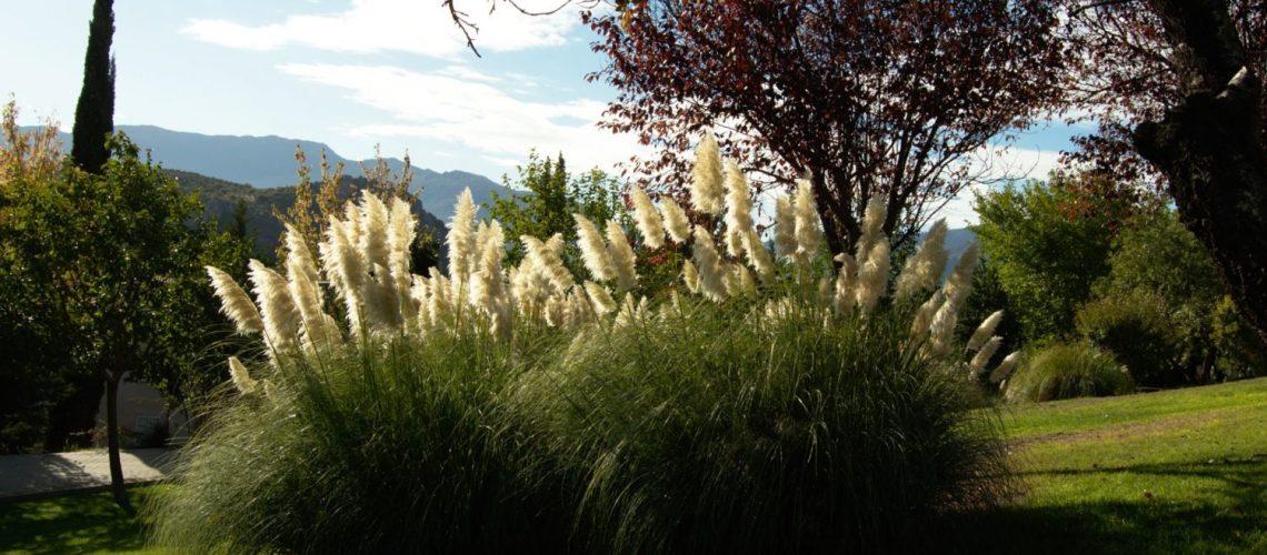 Pampasgras im Garten pflanzen - Tipps und Infos