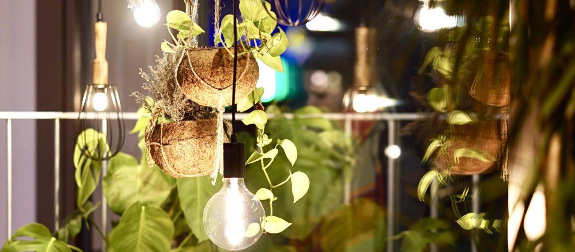 zimmerpflanzen_licht_beleuchtung